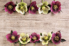 Vue les fleurs de ressort lenten s'est levé dans une rangée sur le fond rustique brun clair Copiez l'espace Photo stock