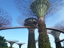 Vue majestueuse Singapour @GardensbytheBay Photos stock