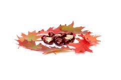 Vue merveilleuse des lames et des châtaignes d'automne. Image stock