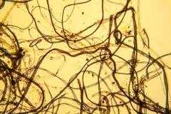 Vue microscopique de la poussière Image libre de droits