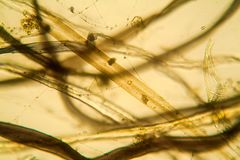 Vue microscopique de la poussière Images stock