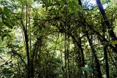 Vue moussue de jungle au centre biologique de Las Quebradas photo stock