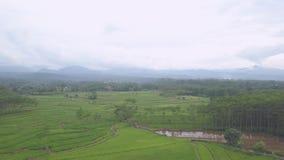 Vue naturelle dans la ville de Pekalongan banque de vidéos