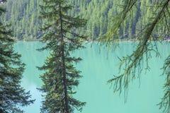 Vue naturelle de lac et de sapins Photographie stock libre de droits