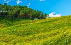 Vue naturelle de paysage de champ de diversifolia de Tithonia Images libres de droits