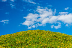 Vue naturelle de paysage de champ de diversifolia de Tithonia Image stock