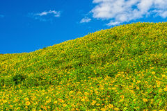 Vue naturelle de paysage de montagne de champ de diversifolia de Tithonia Photos libres de droits
