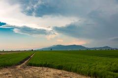 Vue nuageuse dans le del l'Èbre de delta Photographie stock libre de droits