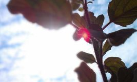Vue nuageuse derrière l'arbre Photos stock