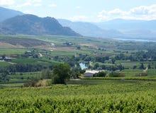 Vue Oliver Canada de vignoble de Colombie-Britannique photo libre de droits