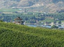 Vue Oliver Canada de vignoble de Colombie-Britannique photographie stock
