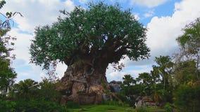 Vue panoramique d'arbre de la vie au r?gne animal clips vidéos
