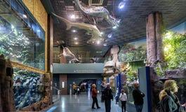 Vue panoramique d'intérieur aquatique de zoo à Moscou Images stock