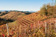 Vue panoramique d'un vignoble dans la région de Langhe pendant l'automne Image stock