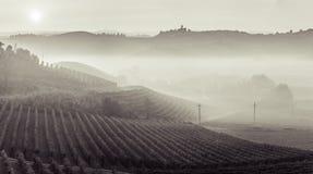 Vue panoramique d'un vignoble dans la région de Langhe pendant l'automne Photographie stock