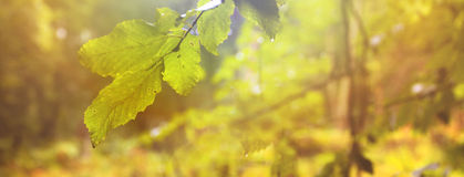 Vue panoramique d'une forêt avec des feuilles d'automne à l'arrière-plan Photos stock