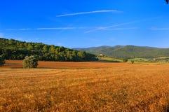 Vue panoramique d'une zone de blé Photographie stock libre de droits