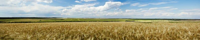 Vue panoramique d'une zone de blé Photo stock