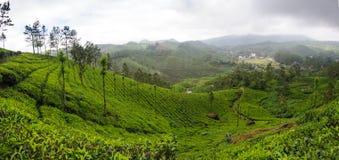 Vue panoramique dans Munnar dans Ghats occidental, Kerala photo libre de droits