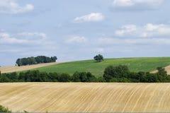 Vue panoramique de champ de maïs après récolte dans le paysage Images stock