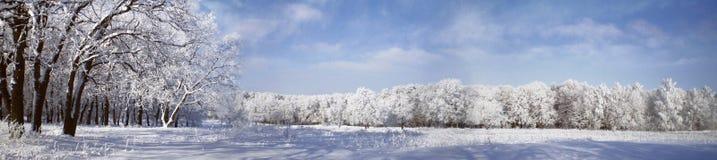 Vue panoramique de l'hiver Photo stock