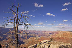 Vue panoramique de parc national de Grand Canyon en Arizona, Etats-Unis Images libres de droits