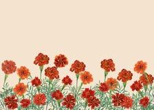 Vue panoramique de patula de Tagetes, le souci français illustration libre de droits