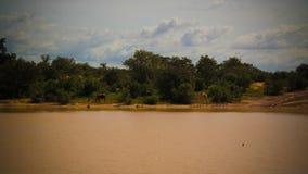 Vue panoramique de paysage à Sahel et à oasis Dogon Tabki avec la rivière en crue, Dogondoutchi, Niger Image stock