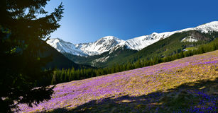 Vue panoramique de ressort de vallée de chocholowska en montagne de Tatra Photo libre de droits