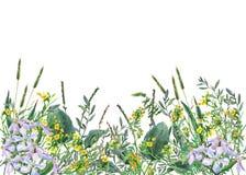 Vue panoramique des fleurs et de l'herbe sauvages de pré sur le fond blanc image libre de droits