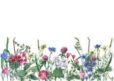 Vue panoramique des fleurs et de l'herbe sauvages de pré sur le fond blanc illustration stock