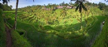 Vue panoramique des gisements de riz de terrasse, Ubud photographie stock libre de droits