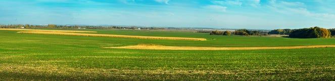 Vue panoramique des lignes champ vert et champ de maïs sec photographie stock libre de droits