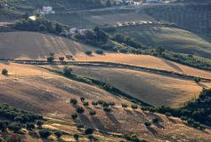 Vue panoramique des oliveraies et des fermes sur Rolling Hills de l'Abruzzo photos libres de droits