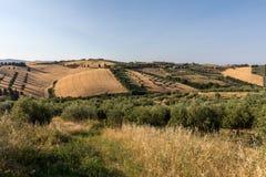 Vue panoramique des oliveraies et des fermes sur Rolling Hills de l'Abruzzo images libres de droits