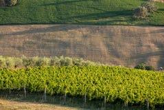 Vue panoramique des oliveraies, des vignobles et des fermes sur Rolling Hills de l'Abruzzo photographie stock libre de droits