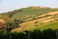 Vue panoramique des oliveraies, des vignobles et des fermes sur Rolling Hills de l'Abruzzo image stock