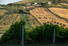 Vue panoramique des oliveraies, des vignobles et des fermes sur Rolling Hills de l'Abruzzo photos stock