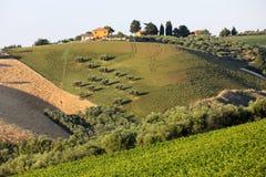 Vue panoramique des oliveraies, des vignobles et des fermes sur Rolling Hills de l'Abruzzo image libre de droits