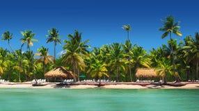 Vue panoramique des palmiers exotiques sur la plage tropicale photo libre de droits