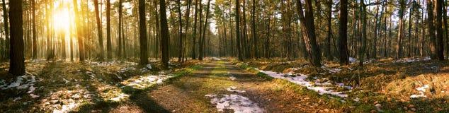 Vue panoramique du chemin forestier pendant le matin Photo libre de droits