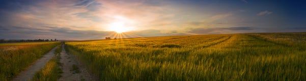 Vue panoramique du coucher du soleil sur le champ du grain Photo libre de droits