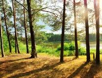 Vue panoramique du lac dans la forêt Photos stock