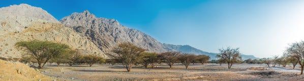 Vue panoramique du terrain montagneux dans le désert avec une vallée verte images libres de droits