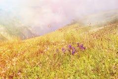 Vue panoramique modifiée la tonalité au-dessus des montagnes de Carpatian, et un grand brouillard Image stock