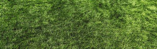 Vue panoramique supérieure de texture verte de pelouse pour le fond image stock