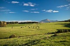 Vue panoramique sur le rhune coloré de La de montagne au-dessus du pré de vert de ressort en ciel bleu Images libres de droits