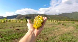Vue panoramique sur le vignoble et groupe de raisins juteux dans la main d'agriculteur Concept de temps de récolte et paysage nat images stock