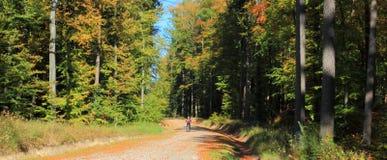 Vue panoramique sur une route dans la forêt d'automne photo stock
