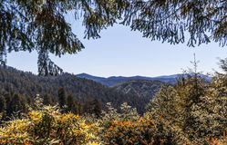 Vue par des arbres Image libre de droits